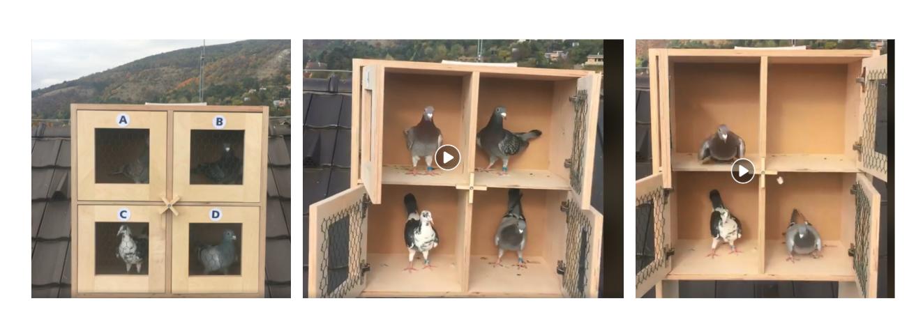 holuby